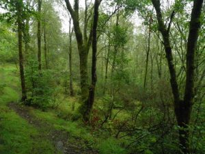 Image of trees in the Temperate Deciduous Forest
