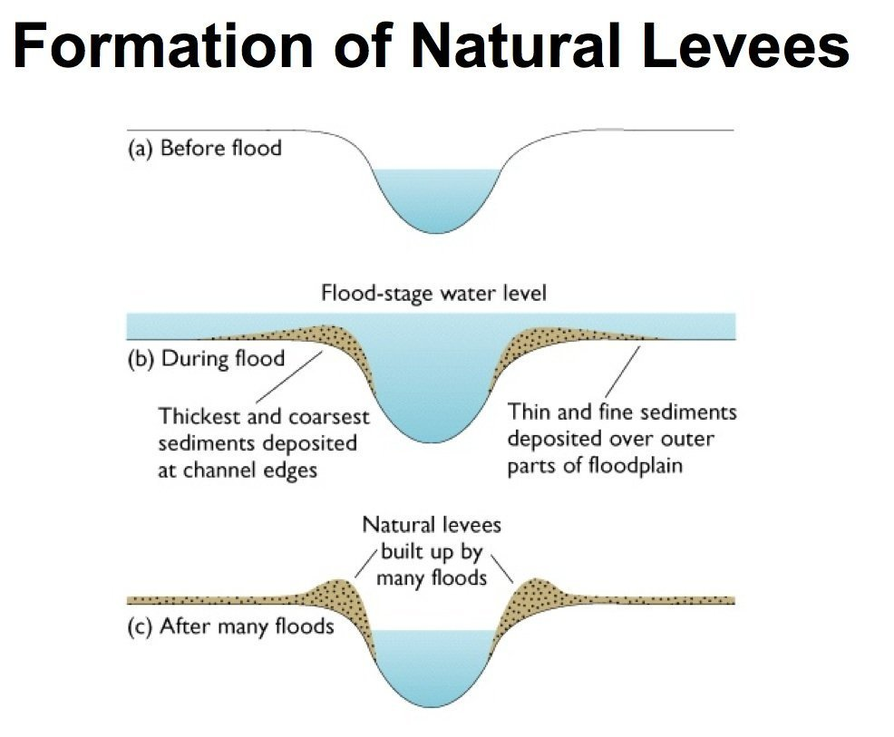 The stages in the formation of a natural levee