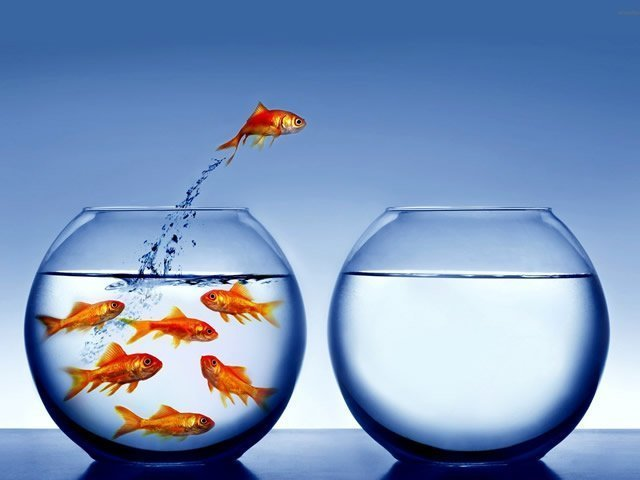 image of a goldfish bowl jumping into another