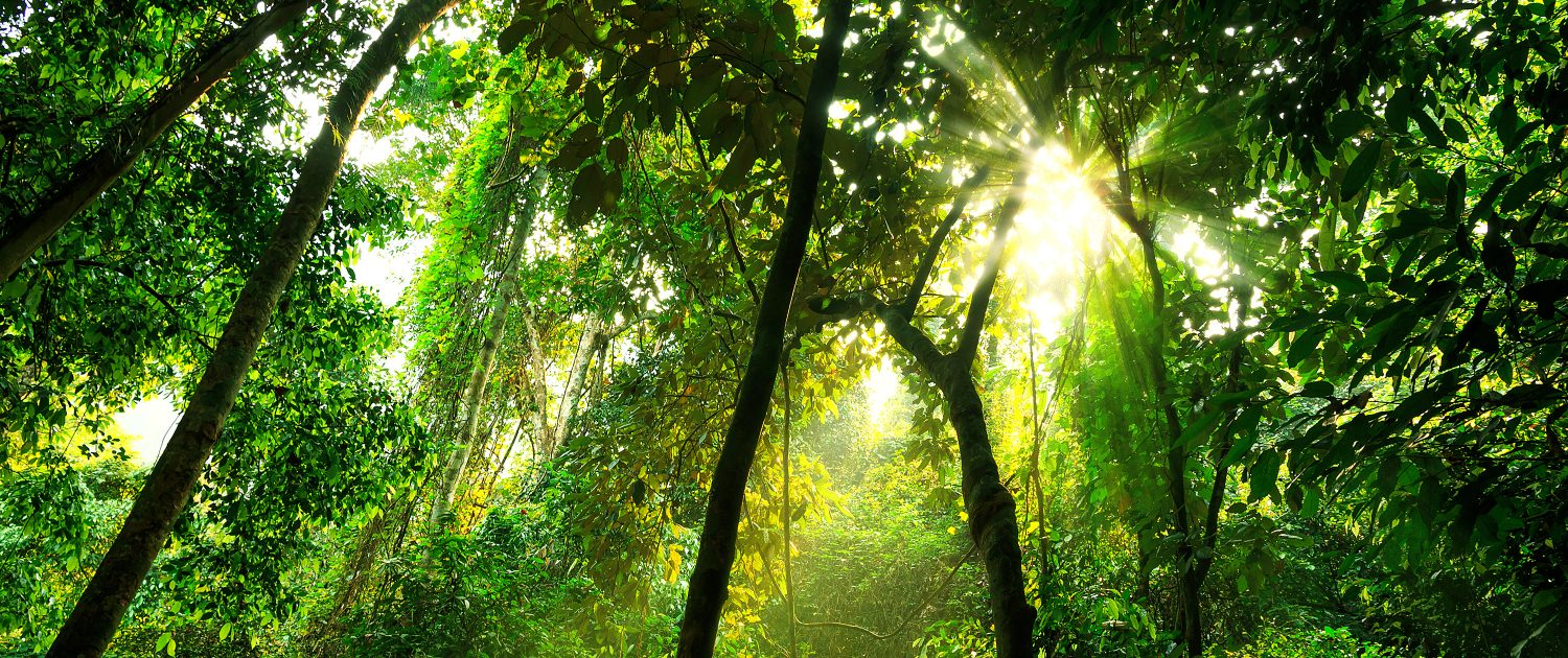 Tropical rainforest under canopy