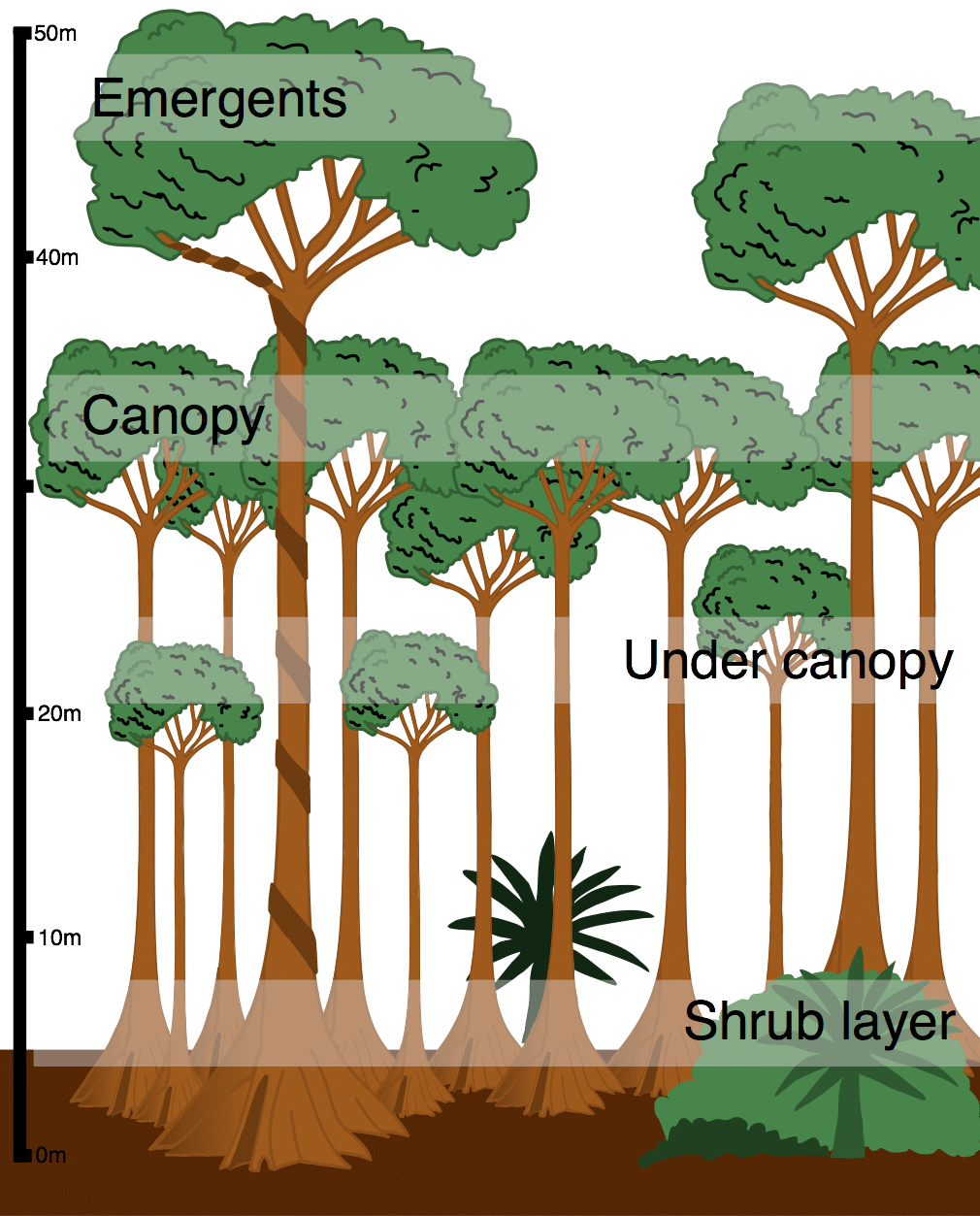 picture about Layers of the Rainforest Printable identified as What is the design of the tropical rainforest? - World-wide-web