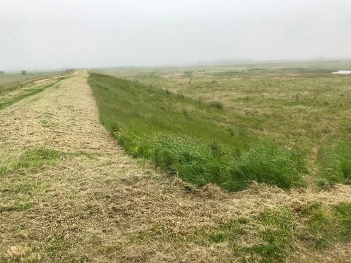Embankment at Donna Nook