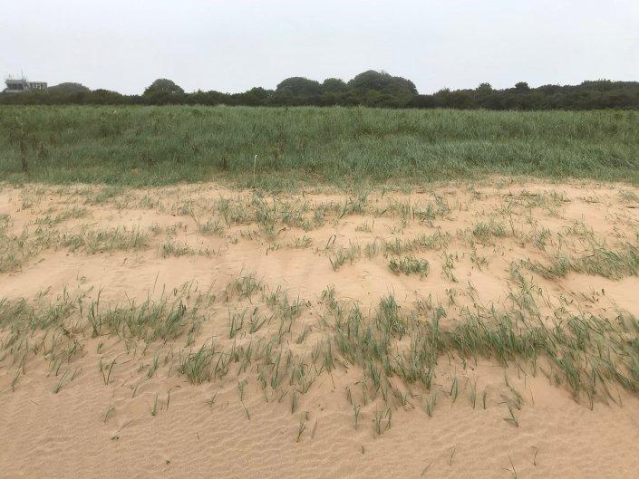 Vegetation succession at Donna Nook sand dunes
