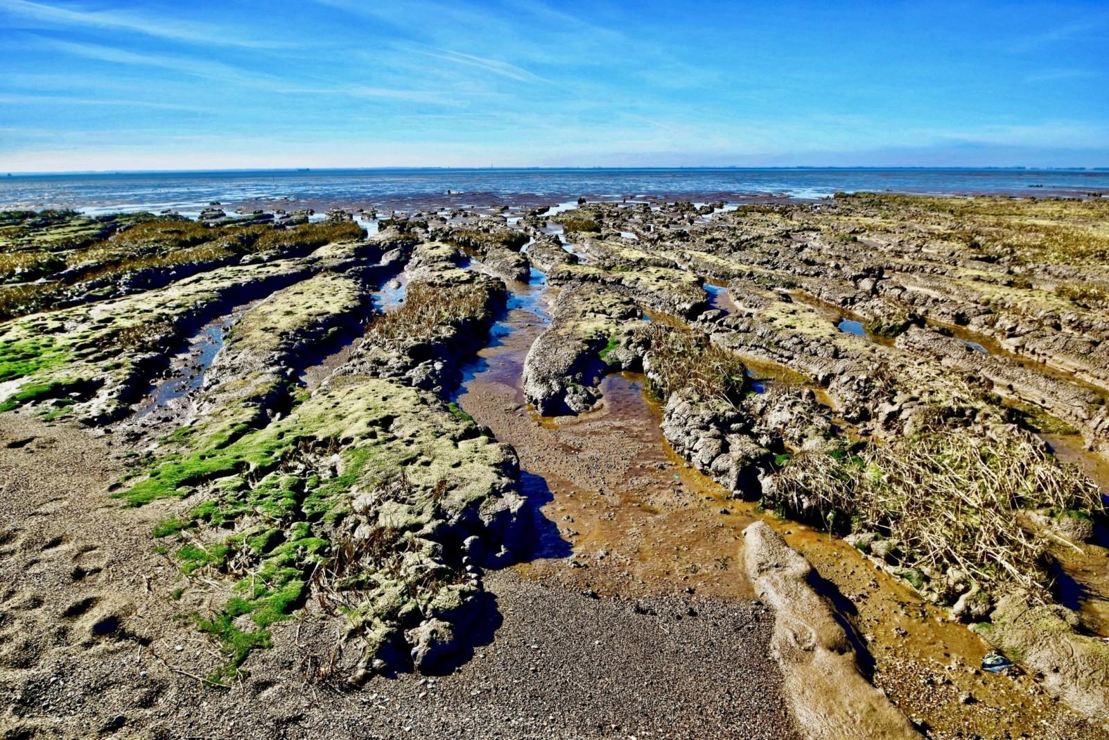 Salt marsh at Spurn Point