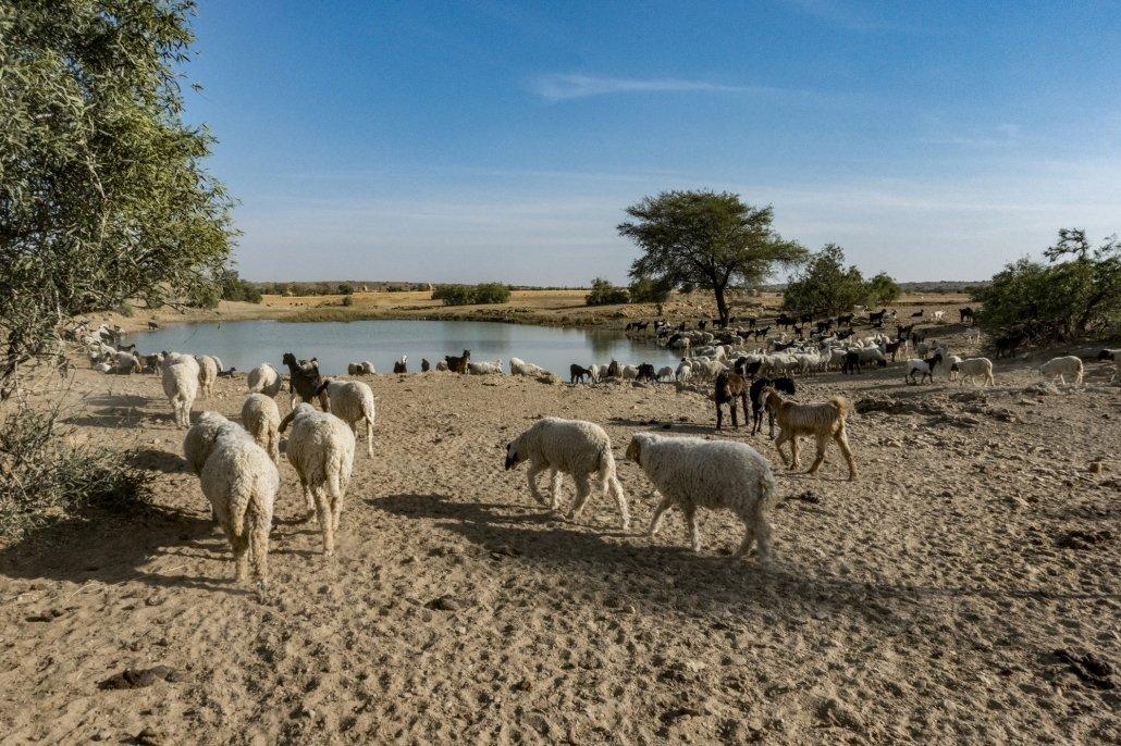 A toba in the Thar Desert