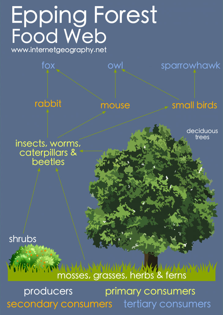 Epping Forest Food Web