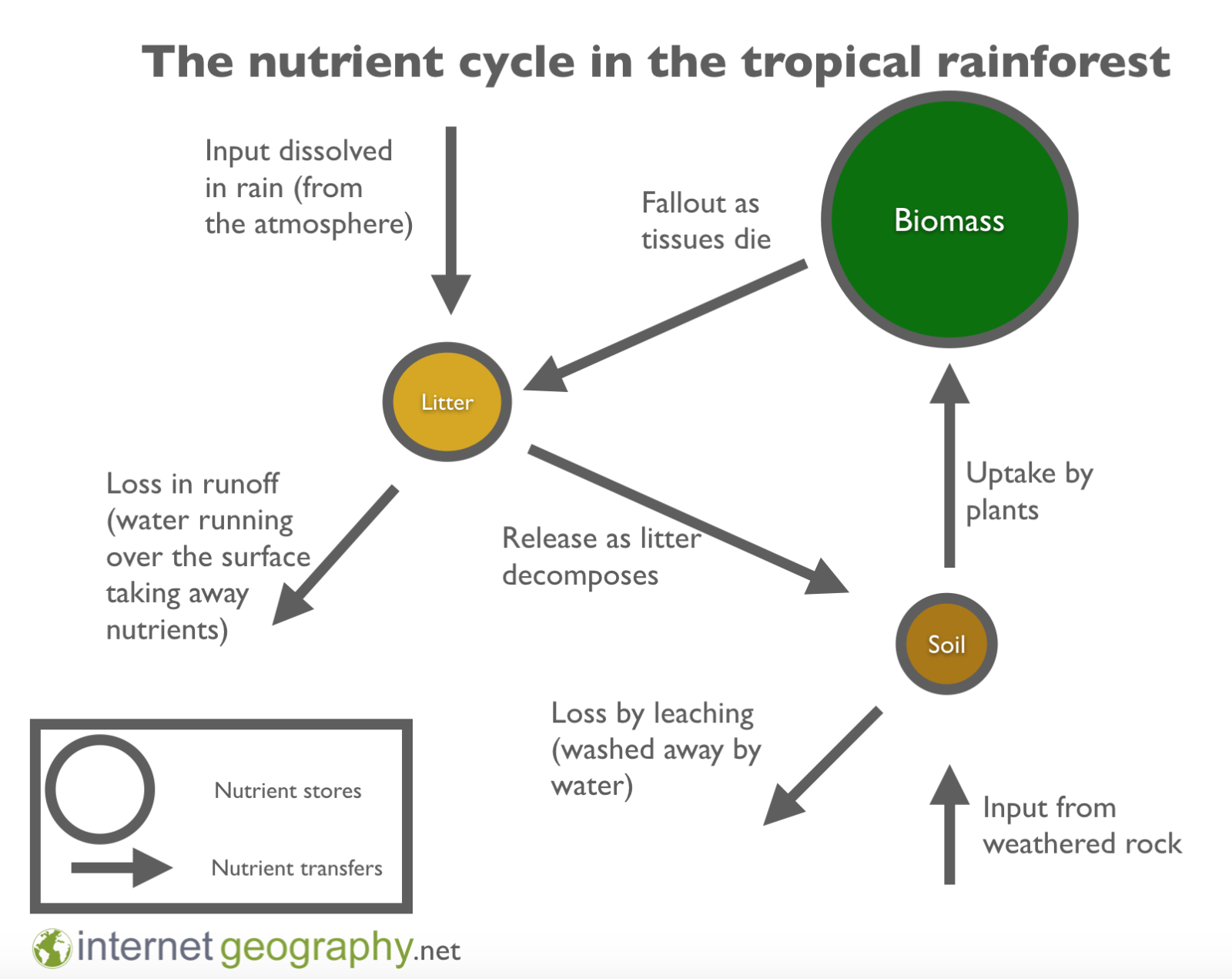 The nutrient cycle in the rainforest ecosystem