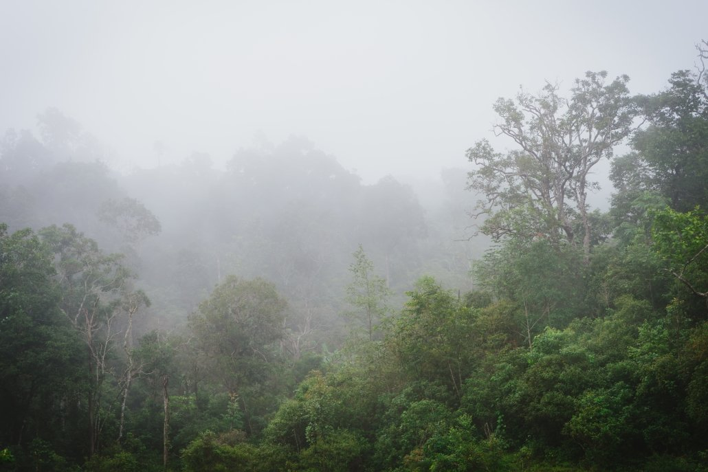Evapotranspiration in the rainforest