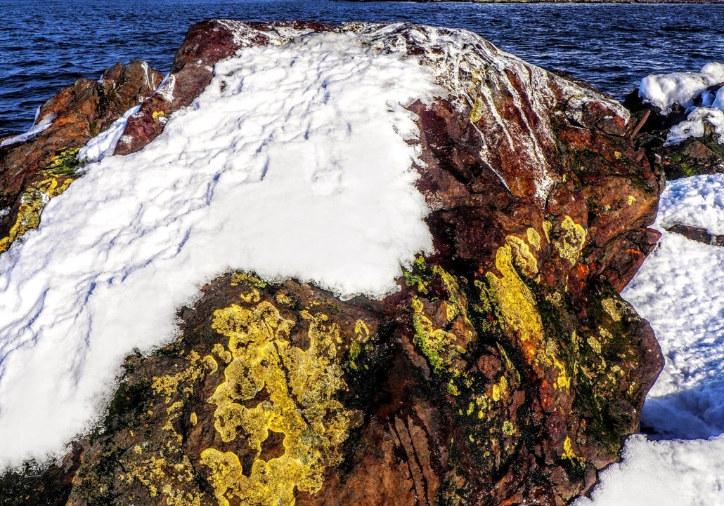 lichen on snow covered rock