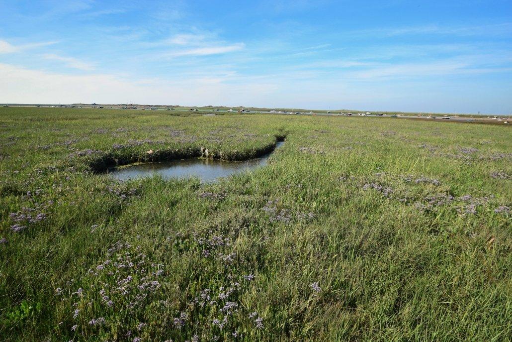 Salt marsh at Blakeney Point